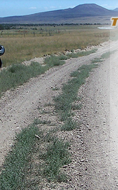 bmw long dirt road center