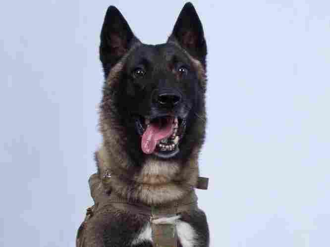 commando-dog-ad1f821d5e352a943b7dc425ddee0b5401444ede-s1100-c15.jpg